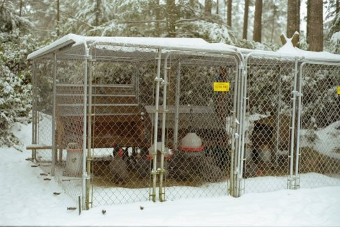 snow chickens Chicken Coop Plans for UK